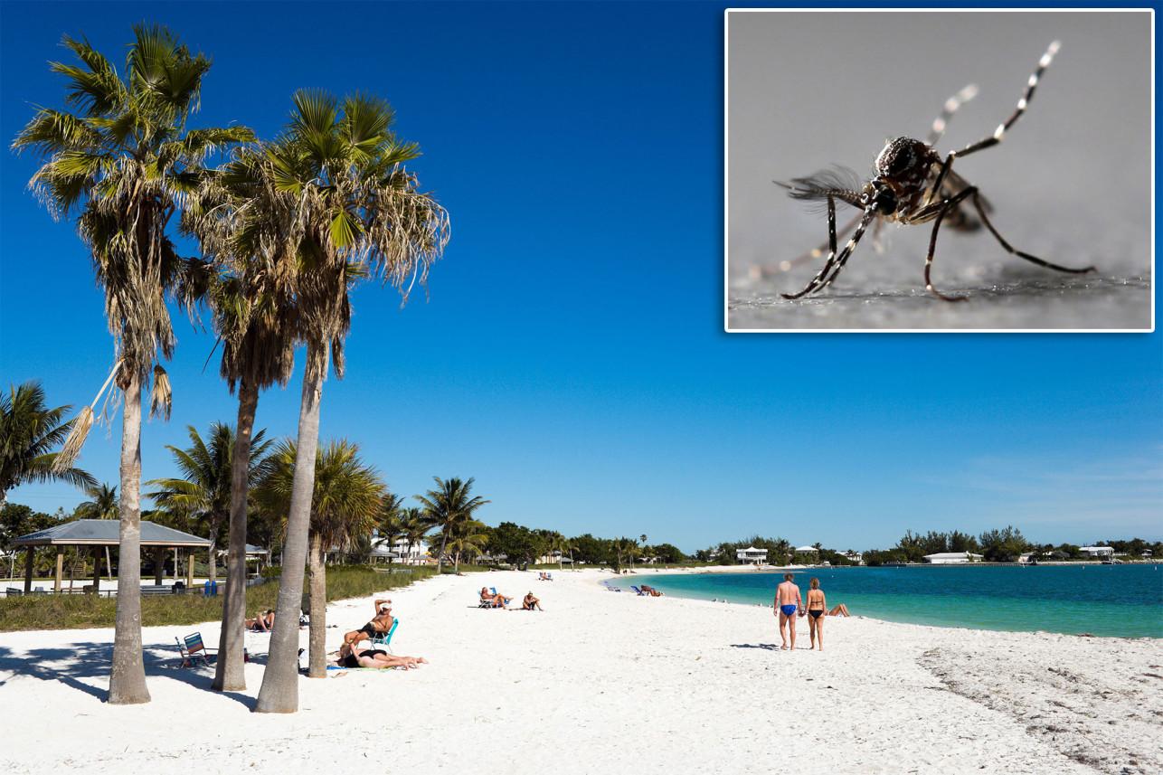 Miles de mosquitos modificados genéticamente se liberan en Florida - Ahora US
